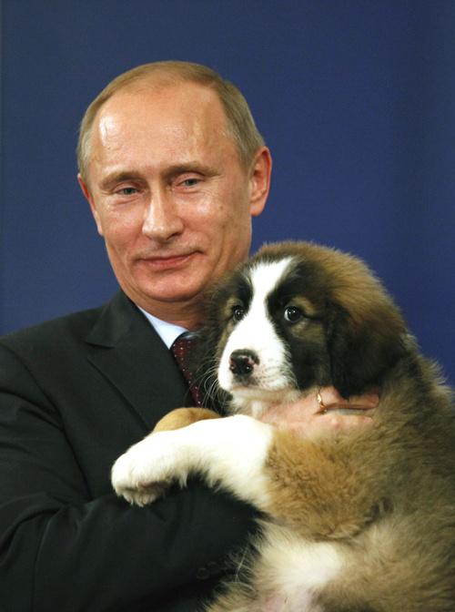 putin-puppy